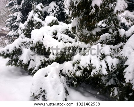 Winter branches of dog rose. Winter landscape in the forest #1021482538