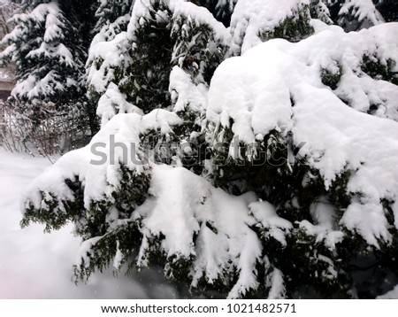 Winter branches of dog rose. Winter landscape in the forest #1021482571