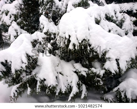 Winter branches of dog rose. Winter landscape in the forest #1021482574