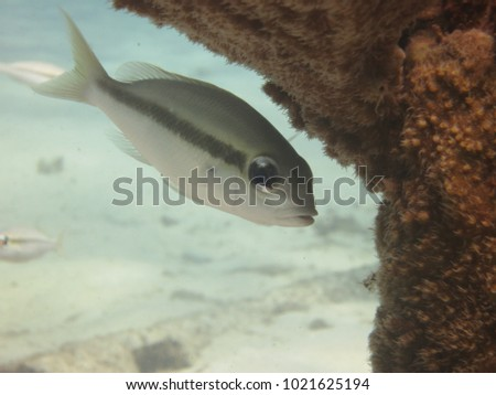 Coral and reef fishes that found within artificial reef structure at Redang island, Malaysia #1021625194