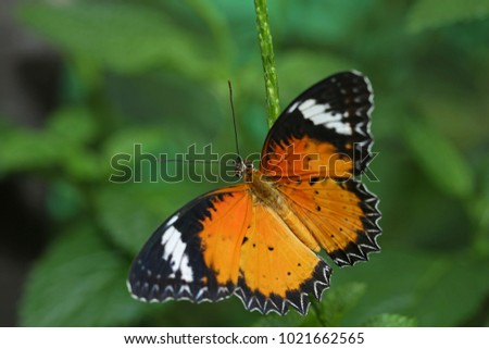Butterfly on flower in nature #1021662565