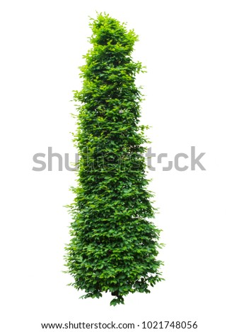 Green tree or a bush of a vertical shape, isolated, on white background #1021748056
