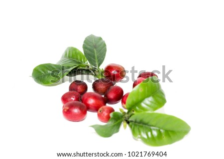 ripe coffee beans on white background #1021769404