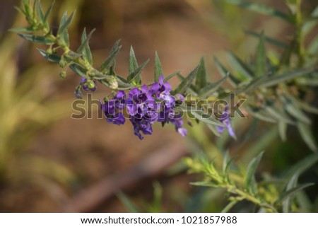 photography of beautiful flowers for background #1021857988