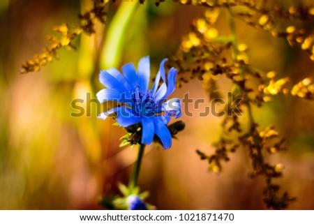 blue flower indian summer #1021871470