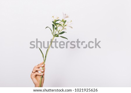 White flower in female hand with manicure on white background close-up #1021925626