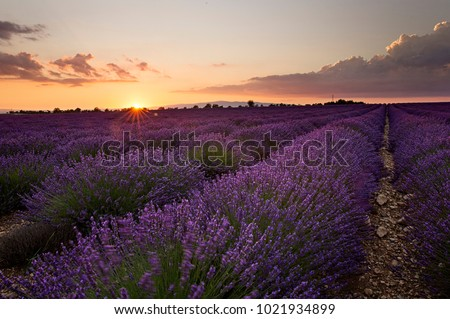 Sunset over the valley near Valensole, France #1021934899