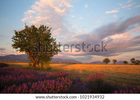Sunset over the valley near Valensole, France #1021934932