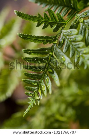 green fern with water #1021968787