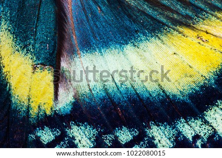 Detailed wing of Alcides orontes, large Uraniidae butterfly living in Indonesia Royalty-Free Stock Photo #1022080015