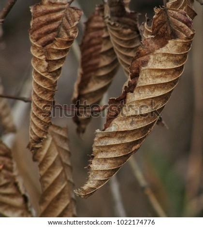 Dry autumn leaves #1022174776