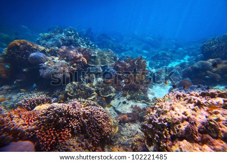 Underwater shoot of a vivid coral reef #102221485