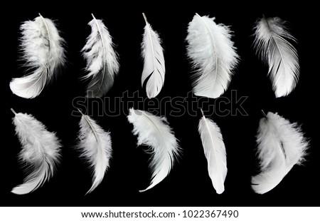 Set of white feathers isolated on black background #1022367490