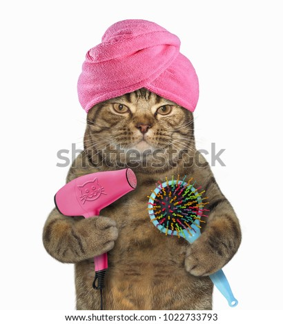 The cat with a towel around his head is holding a comb and a hair dryer. White background.