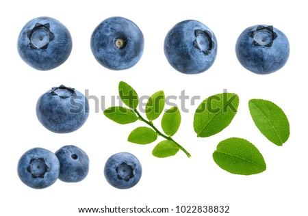 Blueberries isolated on white background without shadow set #1022838832