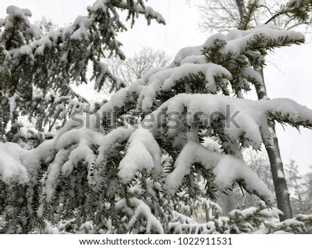 Snow on a Tree branches. Winter background. #1022911531