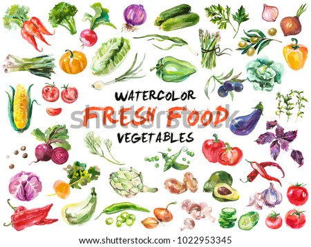 Watercolor painted collection of vegetables. Hand drawn fresh food design elements isolated on white background.   Royalty-Free Stock Photo #1022953345