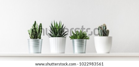 Collection of various cactus and succulent plants in different pots. Potted cactus house plants on white shelf against white wall. Royalty-Free Stock Photo #1022983561
