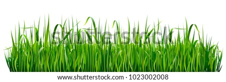 Green grass borders. High green fresh grass isolated on white background.  Royalty-Free Stock Photo #1023002008