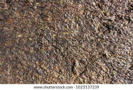 Surface of seaweed on the ocean coast. #1023137239