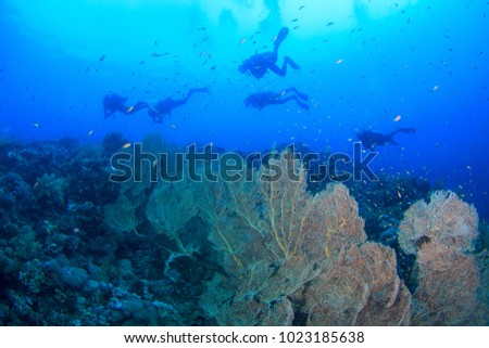 Divers swim past beautiful coral reef underwater in the Red Sea, Egypt #1023185638