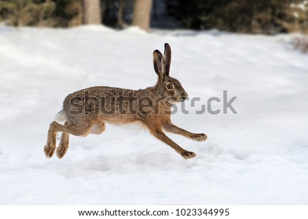 Hare running in the winter forest #1023344995