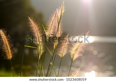 Close up photo with shallow depth of field of soft water plants back-lit by the golden light making it look pinkish color. Peaceful view. Royalty-Free Stock Photo #1023608059