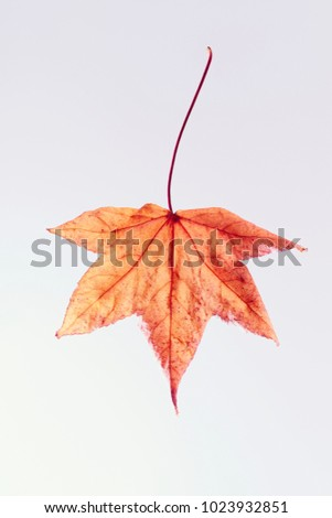 colored leaves on white background. the veins of a leaf. #1023932851
