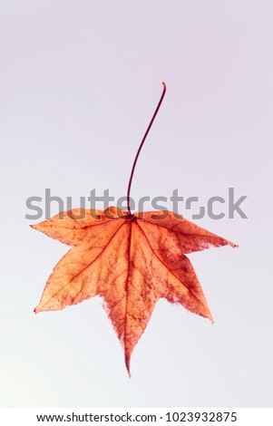 colored leaves on white background. the veins of a leaf. #1023932875