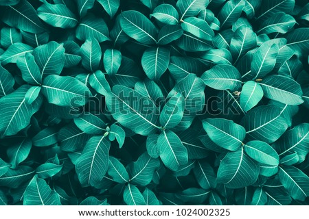 leaves texture background, blue tone #1024002325