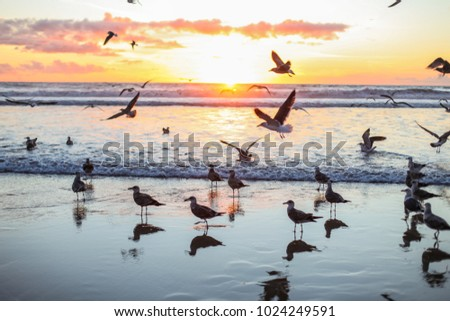 Seagulls on a beach, on sunset time, beautiful clouds #1024249591