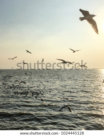 Seagulls flying above the sea #1024445128