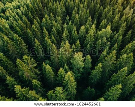 Aerial top view of summer green trees in forest in rural Finland. Drone photography #1024452661