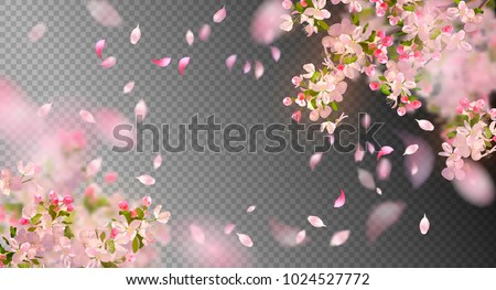 Vector background with spring cherry blossom. Sakura branch in springtime with falling petals and blurred transparent elements Royalty-Free Stock Photo #1024527772