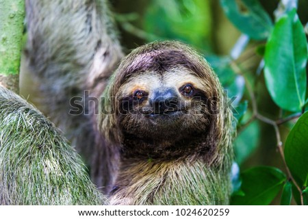 sloth, Manuel Antonio National Park, Costa Rica, Central America #1024620259