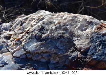 Petrified wood can be found scattered throughout the petrified forest/ painted desert national park #1024942021