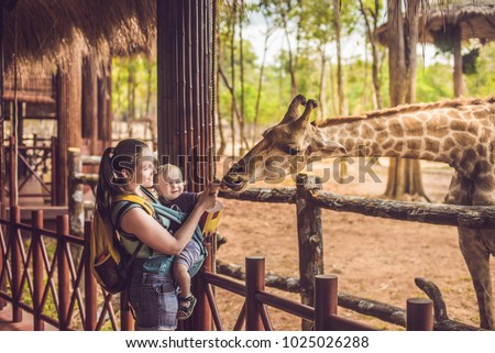 Happy mother and son watching and feeding giraffe in zoo. Happy family having fun with animals safari park on warm summer day. Royalty-Free Stock Photo #1025026288
