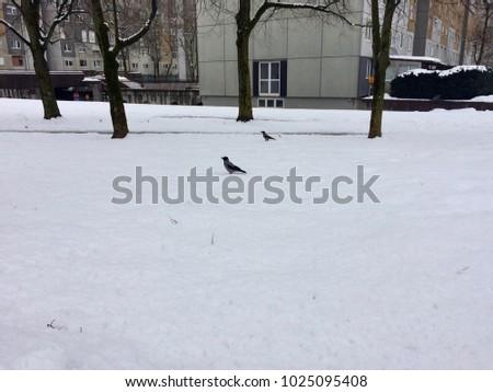 Bird on the snow #1025095408