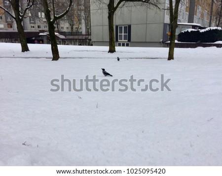 Bird on the snow #1025095420