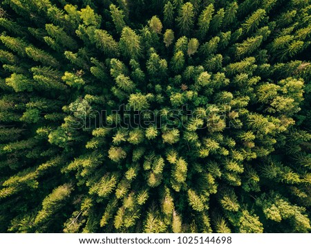 Aerial top view of summer green trees in forest in rural Finland. Drone photography #1025144698