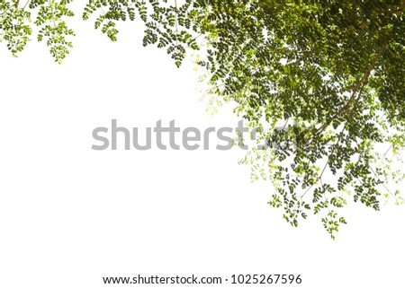 Green leaf isolated on white background. #1025267596