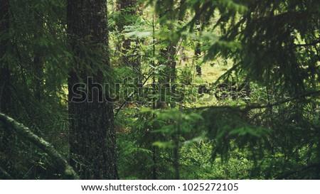 wet green summer forest of karelia #1025272105