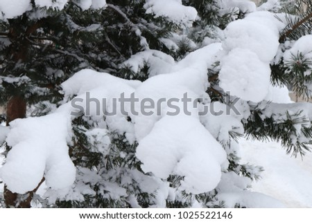 Snowy Fir Branches. Winter Christmas Tree Background. #1025522146