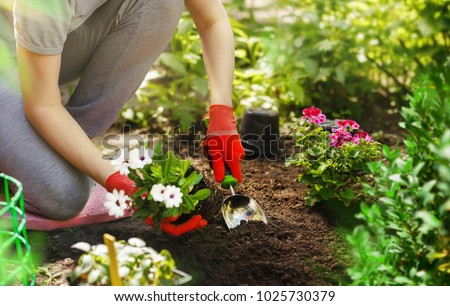 Gardener woman planting flowers in the summer garden at morning. #1025730379