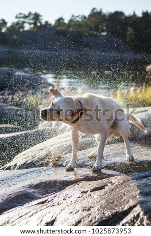 Dog shaking water out of its fur after a swim in the sea. #1025873953