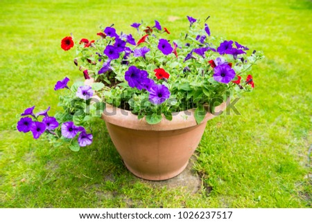 Flowers. A planter full of petunias. #1026237517