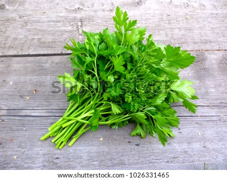 Parsley bunch on wood table background. Fresh parsley on wooden background. Organic italian parsley closeup on rustic board, vegetarian food overhead. Bunch of raw cilantro herb flat lay, top view #1026331465
