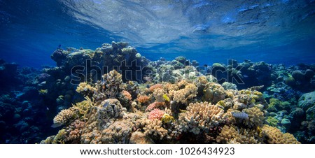 Coral Barrier Reef Royalty-Free Stock Photo #1026434923