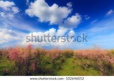 Wild tamarink, Tamarix ramosissima, and blue sky pastel #102646052
