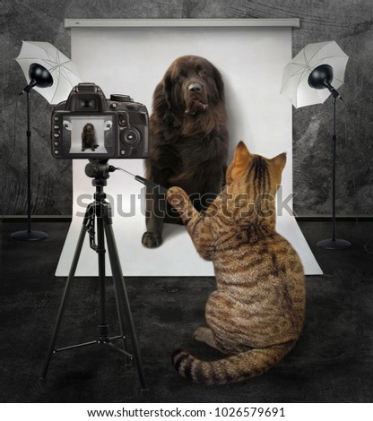 The cat takes pictures of a big dog in his photo studio.